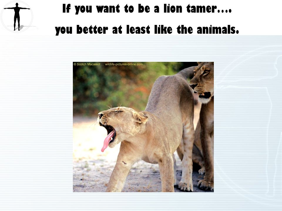 If you want to be a lion tamer…. you better at least like the animals.