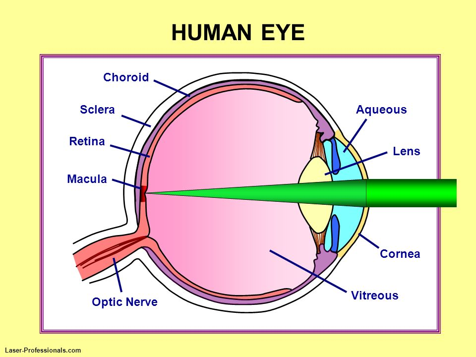 HUMAN EYE Choroid Aqueous Cornea Macula Optic Nerve Sclera Vitreous Retina Lens Laser-Professionals.com