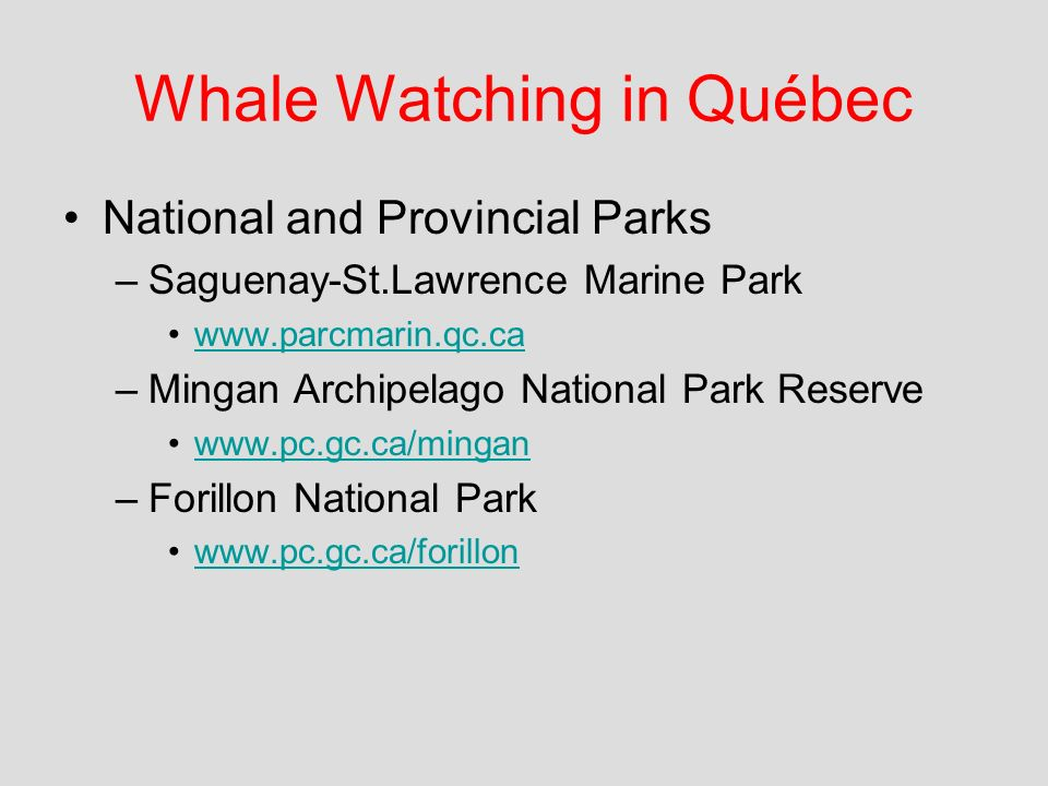 Whale Watching in Québec National and Provincial Parks –Saguenay-St.Lawrence Marine Park www.parcmarin.qc.ca –Mingan Archipelago National Park Reserve www.pc.gc.ca/mingan –Forillon National Park www.pc.gc.ca/forillon