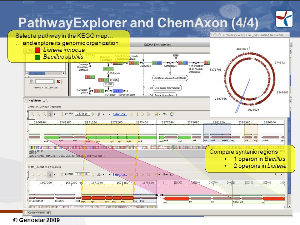 Genostar 2009 PathwayExplorer and ChemAxon (4/4) Select a pathway in the KEGG map… … and explore its genomic organization Listeria innocua Bacillus subtilis Compare syntenic regions 1 operon in Bacillus 2 operons in Listeria