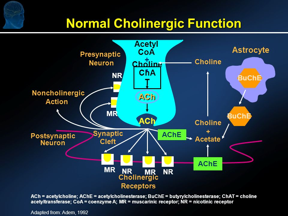 ACh = acetylcholine; AChE = acetylcholinesterase; BuChE = butyrylcholinesterase; ChAT = choline acetyltransferase; CoA = coenzyme A; MR = muscarinic receptor; NR = nicotinic receptor Adapted from: Adem, 1992 Normal Cholinergic Function Postsynaptic Neuron AChE Acetyl CoA Choline ACh Presynaptic Neuron Synaptic Cleft Cholinergic Receptors Acetate Choline + + Astrocyte ACh AChE BuChE ChA T Noncholinergic Action MR NR MR NR MR