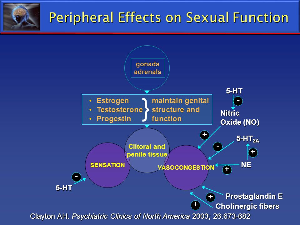 NE+ Peripheral Effects on Sexual Function 5-HT 2A Nitric Oxide (NO) Cholinergic fibers Prostaglandin E 5-HT- + - Clayton AH. Psychiatric Clinics of No