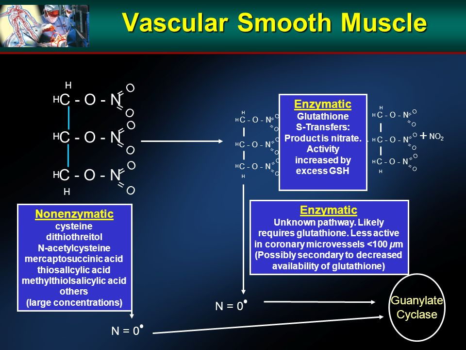 Vascular Smooth Muscle C - O - N H H H H H = O Nonenzymatic cysteine dithiothreitol N-acetylcysteine mercaptosuccinic acid thiosallcylic acid methylthiolsalicylic acid others (large concentrations) C - O - N H H H H H = O C - O - N H H H H H = O Enzymatic Unknown pathway.