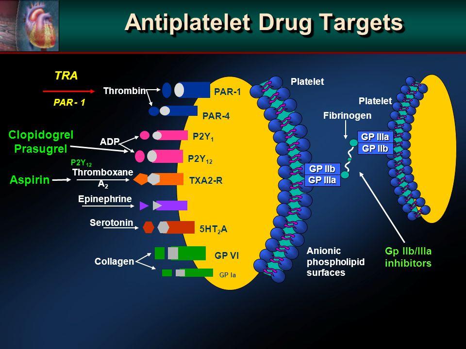 Antiplatelet Drug Targets Platelet Thrombin ADP Thromboxane A 2 Epinephrine Serotonin Collagen PAR-1 PAR-4 P2Y 1 P2Y 12 TXA2-R 5HT 2 A Anionic phospholipid surfaces GP IIb GP IIIa GP VI Platelet GP IIIa GP IIb Fibrinogen GP Ia TRA Clopidogrel Prasugrel Aspirin Gp IIb/IIIa inhibitors PAR - 1 P2Y 12