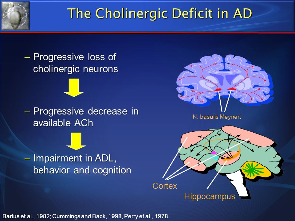 –Progressive loss of cholinergic neurons –Progressive decrease in available ACh –Impairment in ADL, behavior and cognition Hippocampus Cortex N. basal
