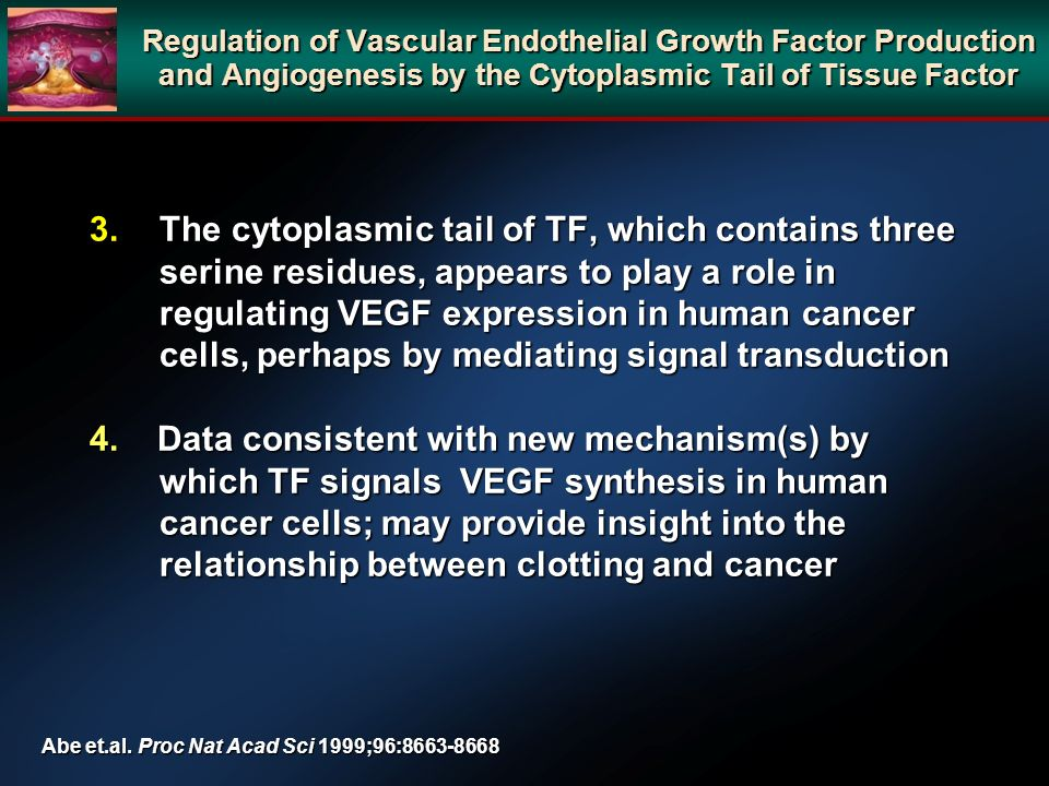 3.The cytoplasmic tail of TF, which contains three serine residues, appears to play a role in regulating VEGF expression in human cancer cells, perhaps by mediating signal transduction 4.