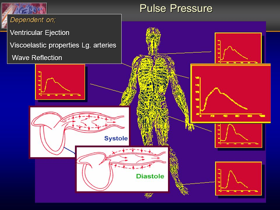 Dependent on; Ventricular Ejection Viscoelastic properties Lg. arteries Wave Reflection Wave Reflection Pulse Pressure
