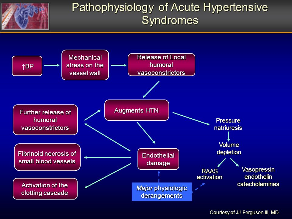 Pathophysiology of Acute Hypertensive Syndromes Mechanical stress on the vessel wall BP BP Release of Local humoral vasoconstrictors Augments HTN Endothelial damage Activation of the clotting cascade Further release of humoral vasoconstrictors Fibrinoid necrosis of small blood vessels Pressure natriuresis Volume depletion RAAS activation Vasopressinendothelincatecholamines Major physiologic derangements Courtesy of JJ Ferguson III, MD.