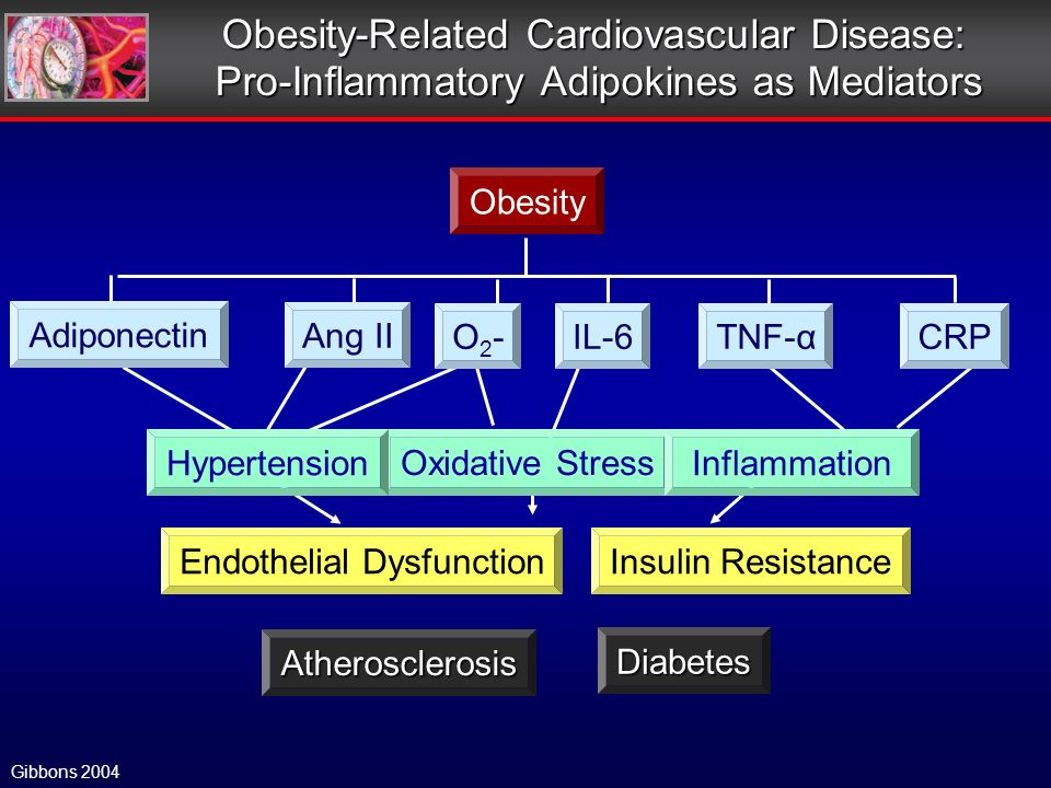 Gibbons 2004 Obesity-Related Cardiovascular Disease: Pro-Inflammatory Adipokines as Mediators Adiponectin O2-O2-IL-6TNF-αCRP Ang II Oxidative Stress InflammationHypertension Obesity Atherosclerosis Diabetes Endothelial DysfunctionInsulin Resistance