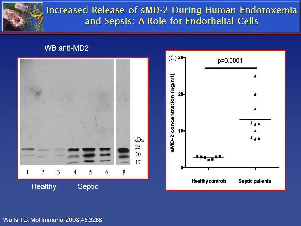 Wolfs TG. Mol Immunol 2008;45:3268 WB anti-MD2 Healthy Septic Increased Release of sMD-2 During Human Endotoxemia and Sepsis: A Role for Endothelial C