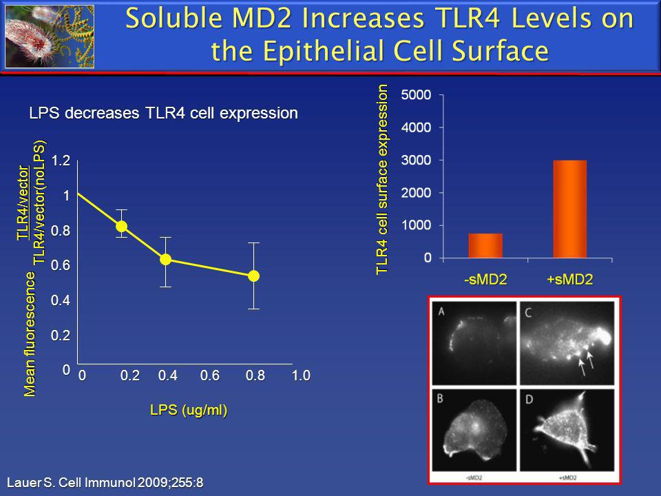 Lauer S. Cell Immunol 2009;255:8 LPS decreases TLR4 cell expression Soluble MD2 Increases TLR4 Levels on the Epithelial Cell Surface TLR4 cell surface