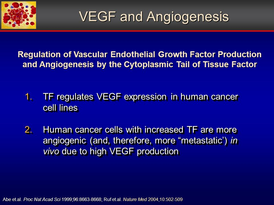 VEGF and Angiogenesis 1.TF regulates VEGF expression in human cancer cell lines 2.Human cancer cells with increased TF are more angiogenic (and, therefore, more metastatic) in vivo due to high VEGF production 1.TF regulates VEGF expression in human cancer cell lines 2.Human cancer cells with increased TF are more angiogenic (and, therefore, more metastatic) in vivo due to high VEGF production Abe et.al.