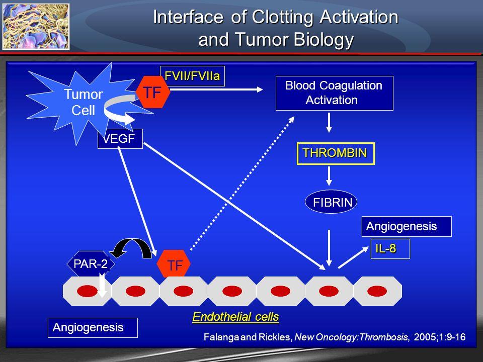TF VEGF Angiogenesis Endothelial cells IL-8 Blood Coagulation Activation FIBRIN PAR-2 Angiogenesis FVII/FVIIa THROMBIN Tumor Cell TF Falanga and Rickl