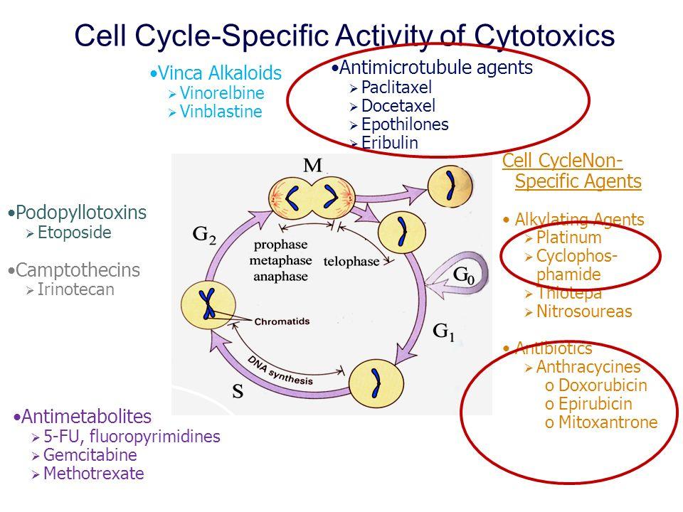 Cell Cycle-Specific Activity of Cytotoxics Antimicrotubule agents Paclitaxel Docetaxel Epothilones Eribulin Antimetabolites 5-FU, fluoropyrimidines Ge