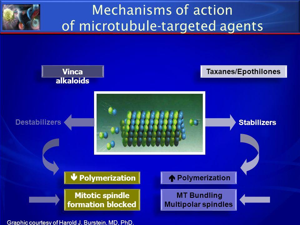 Destabilizers Stabilizers Polymerization Vinca alkaloids Taxanes/Epothilones Mitotic spindle formation blocked MT Bundling Multipolar spindles MT Bund