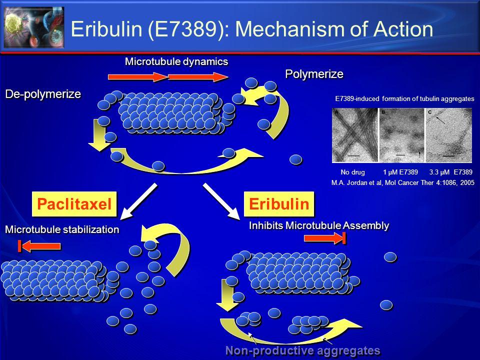 Microtubule stabilization De-polymerize Polymerize Paclitaxel Eribulin Inhibits Microtubule Assembly Non-productive aggregates Microtubule dynamics E7