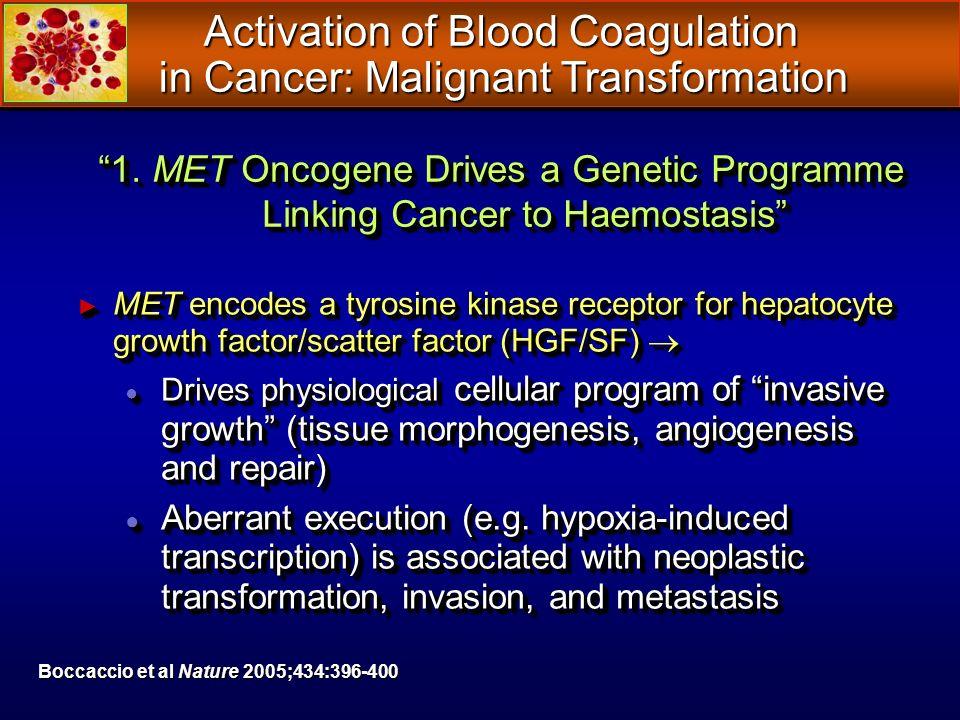 MET encodes a tyrosine kinase receptor for hepatocyte growth factor/scatter factor (HGF/SF) MET encodes a tyrosine kinase receptor for hepatocyte grow