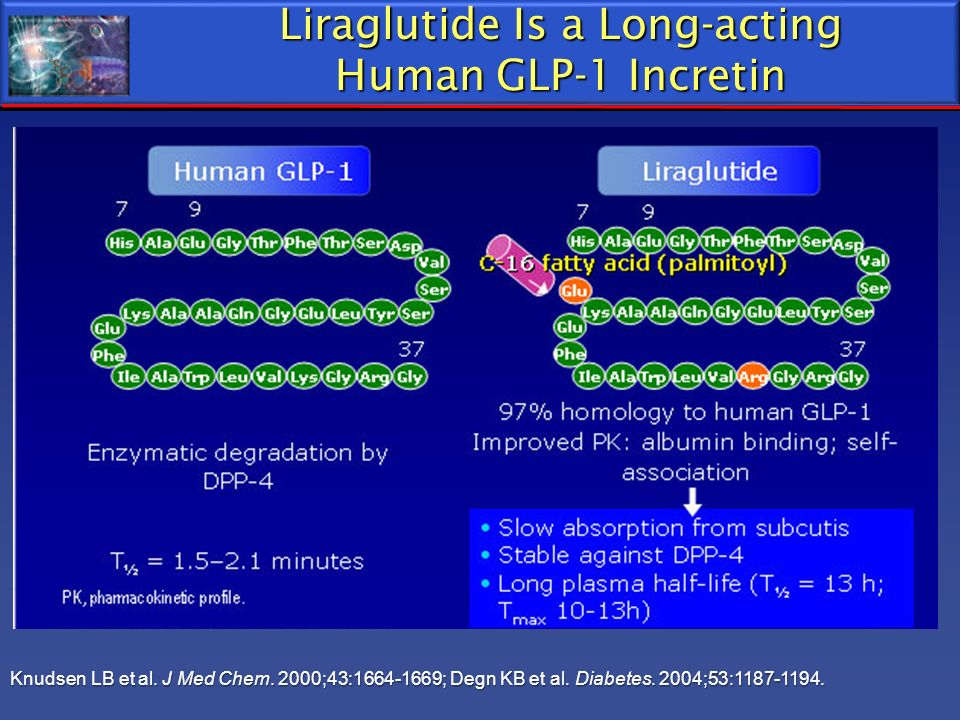 Liraglutide Is a Long-acting Human GLP-1 Incretin Knudsen LB et al. J Med Chem. 2000;43:1664-1669; Degn KB et al. Diabetes. 2004;53:1187-1194.