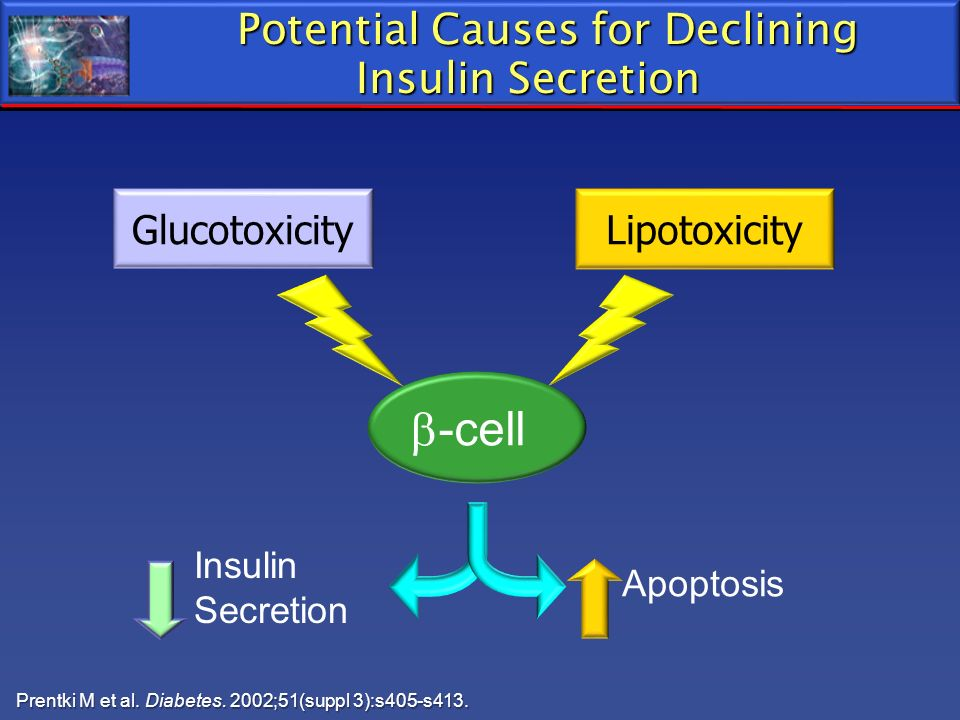 Potential Causes for Declining Insulin Secretion Glucotoxicity Lipotoxicity -cell Apoptosis Insulin Secretion Prentki M et al. Diabetes. 2002;51(suppl