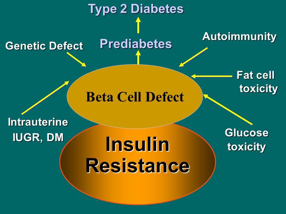 Insulin Resistance Autoimmunity Type 2 Diabetes Prediabetes Beta Cell Defect Genetic Defect Intrauterine IUGR, DM Glucosetoxicity Beta Cell Defect Fat