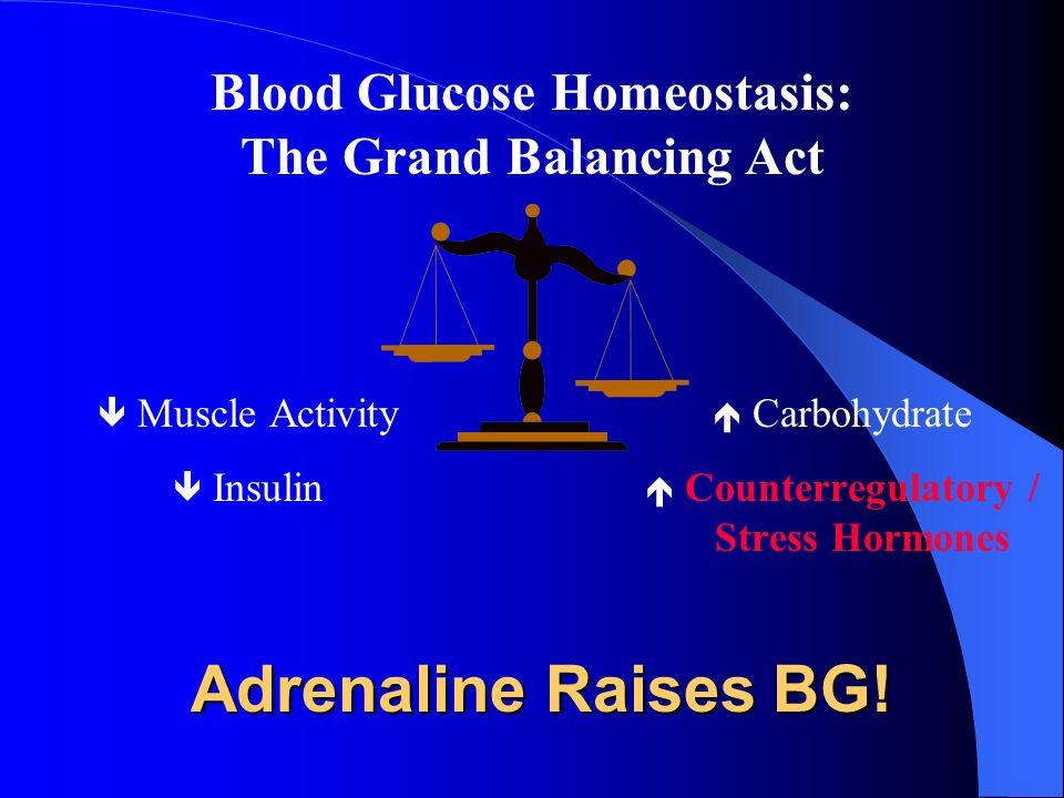 Adrenaline Raises BG! Muscle Activity Insulin Carbohydrate Counterregulatory / Stress Hormones Blood Glucose Homeostasis: The Grand Balancing Act