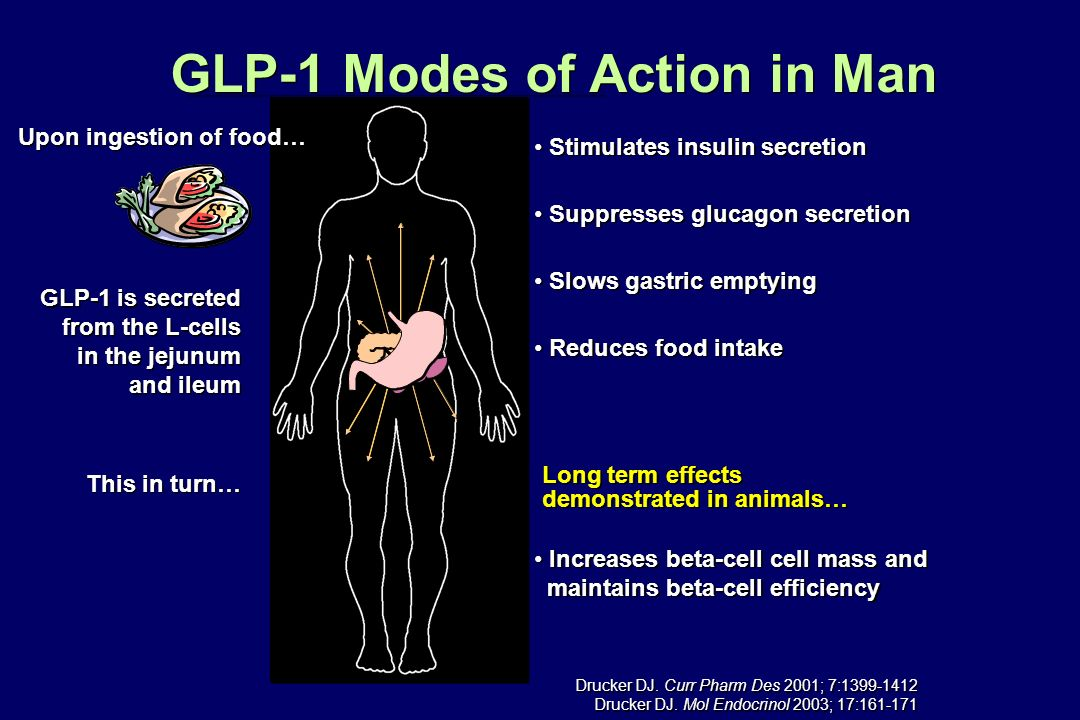 GLP-1 Modes of Action in Man GLP-1 is secreted from the L-cells in the jejunum and ileum GLP-1 is secreted from the L-cells in the jejunum and ileum T