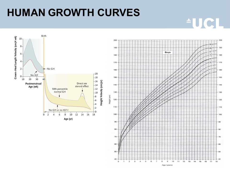 HUMAN GROWTH CURVES