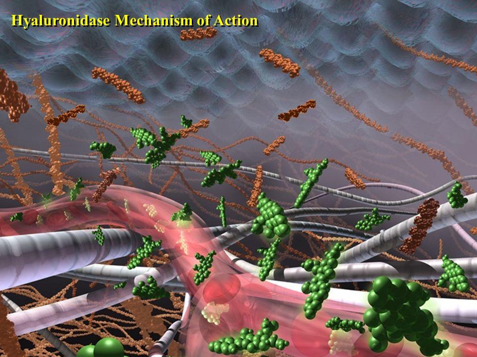 51 Hyaluronidase Mechanism of Action