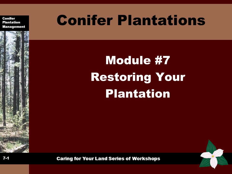 Conifer Plantation Management Caring for Your Land Series of Workshops In Summary 7-23 u Assess the whole health of trees and plantation u Review goals u Develop action plan u Review annually u Do any corrective work in dormant season u Concentrate Work on crop trees u Cut slash close to ground u Use proper tools