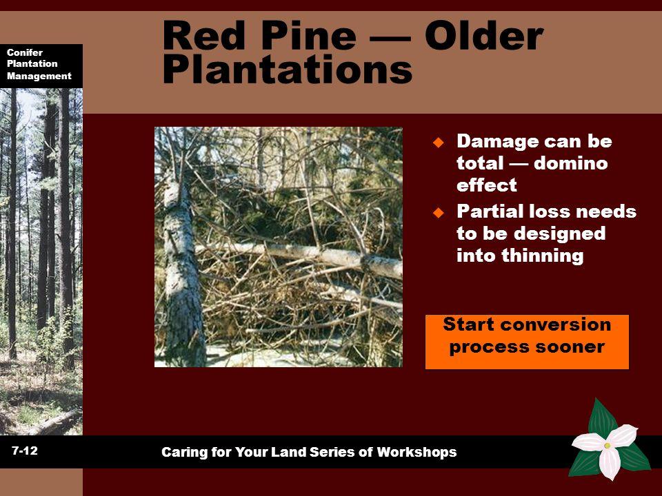 Conifer Plantation Management Caring for Your Land Series of Workshops Red Pine Older Plantations u Damage can be total domino effect u Partial loss n