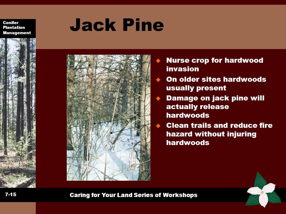 Conifer Plantation Management Caring for Your Land Series of Workshops Jack Pine u Nurse crop for hardwood invasion u On older sites hardwoods usually