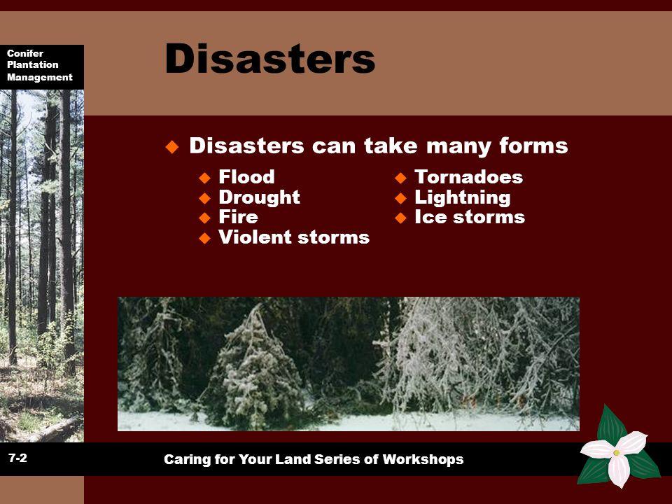 Conifer Plantation Management Caring for Your Land Series of Workshops Disasters u Disasters can take many forms 7-2 u Flood u Drought u Fire u Violen