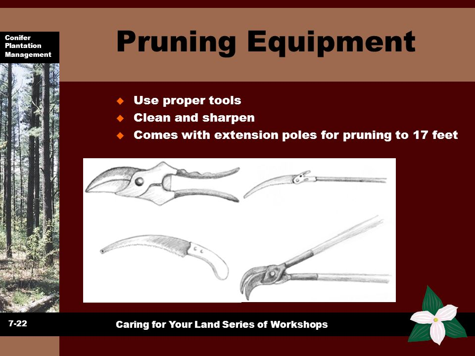 Conifer Plantation Management Caring for Your Land Series of Workshops Pruning Equipment u Use proper tools u Clean and sharpen u Comes with extension