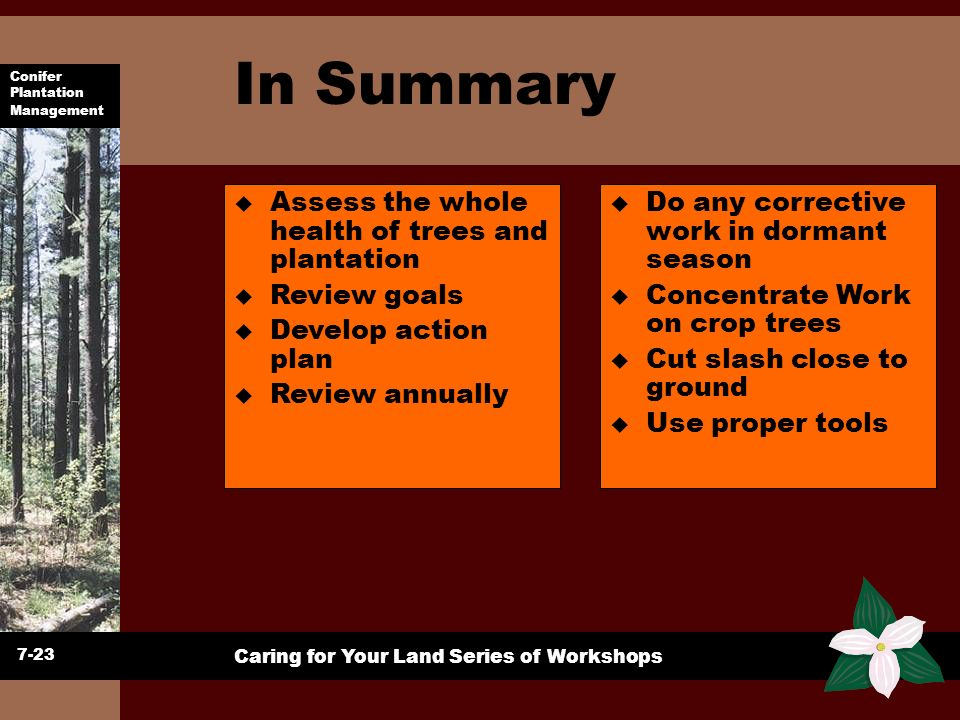 Conifer Plantation Management Caring for Your Land Series of Workshops In Summary 7-23 u Assess the whole health of trees and plantation u Review goal