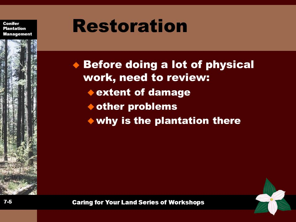 Conifer Plantation Management Caring for Your Land Series of Workshops Assessment Records u Need to know u Why a plantation.