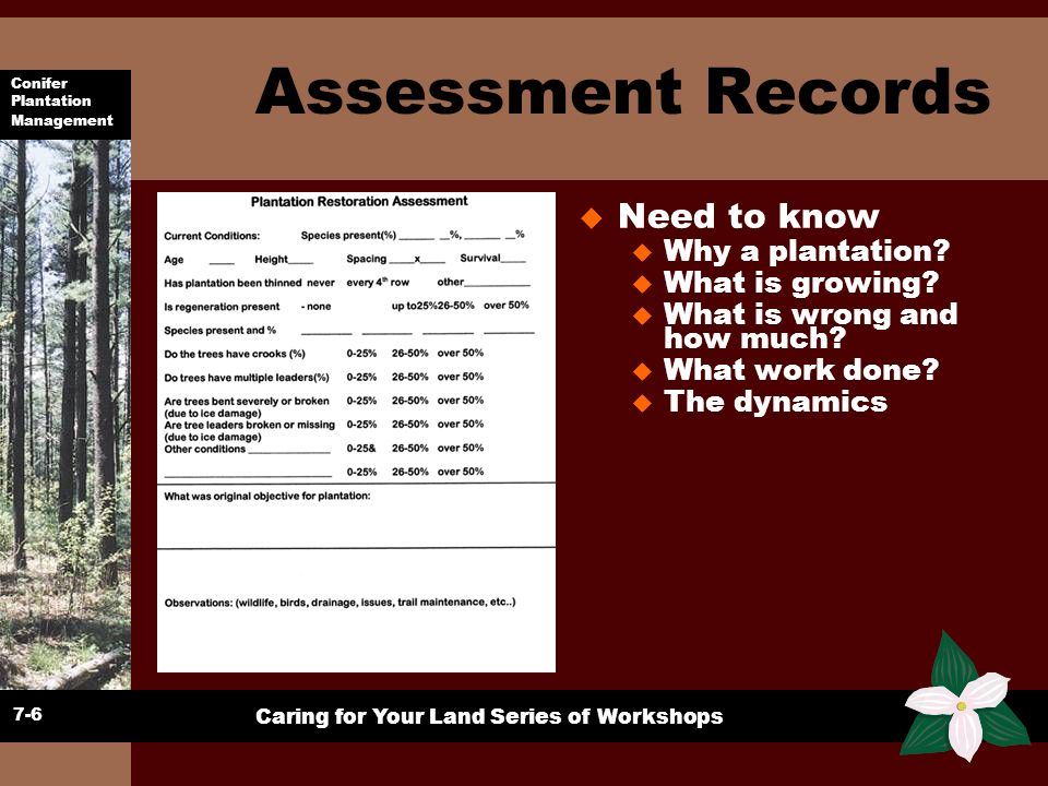 Conifer Plantation Management Caring for Your Land Series of Workshops Assessment Records u Have to decide on: u Your Goals u Potential products u An Action plan to address concerns 7-7