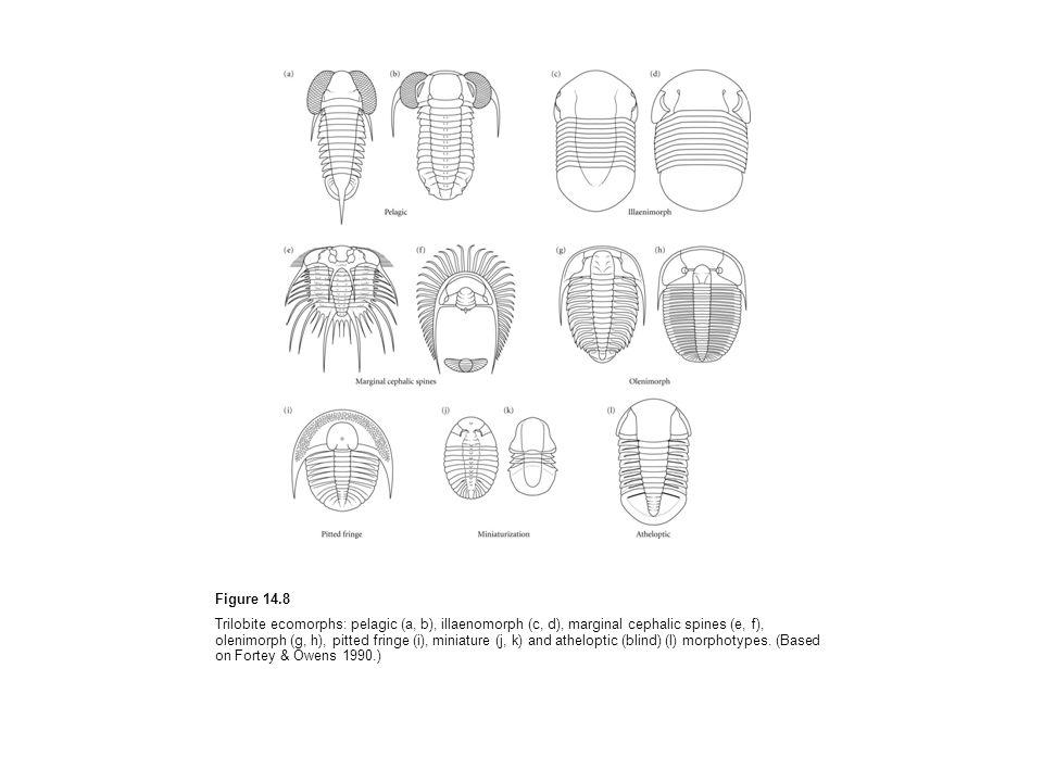 Figure 14.8 Trilobite ecomorphs: pelagic (a, b), illaenomorph (c, d), marginal cephalic spines (e, f), olenimorph (g, h), pitted fringe (i), miniature (j, k) and atheloptic (blind) (l) morphotypes.