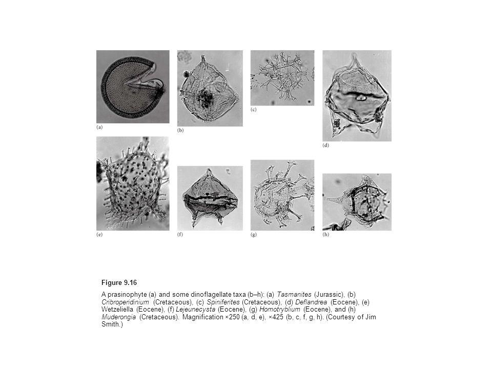 Figure 9.16 A prasinophyte (a) and some dinoflagellate taxa (b–h): (a) Tasmanites (Jurassic), (b) Cribroperidinium (Cretaceous), (c) Spiniferites (Cre