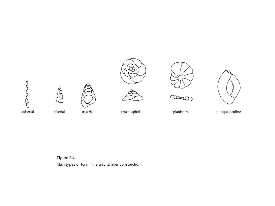 Figure 9.4 Main types of foraminiferan chamber construction.