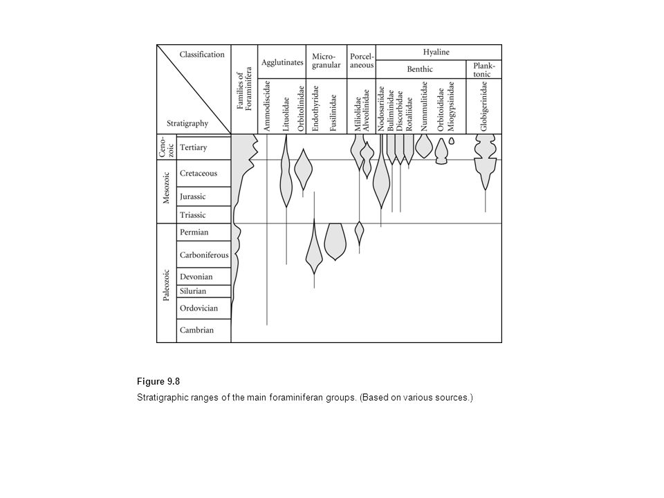 Figure 9.8 Stratigraphic ranges of the main foraminiferan groups. (Based on various sources.)