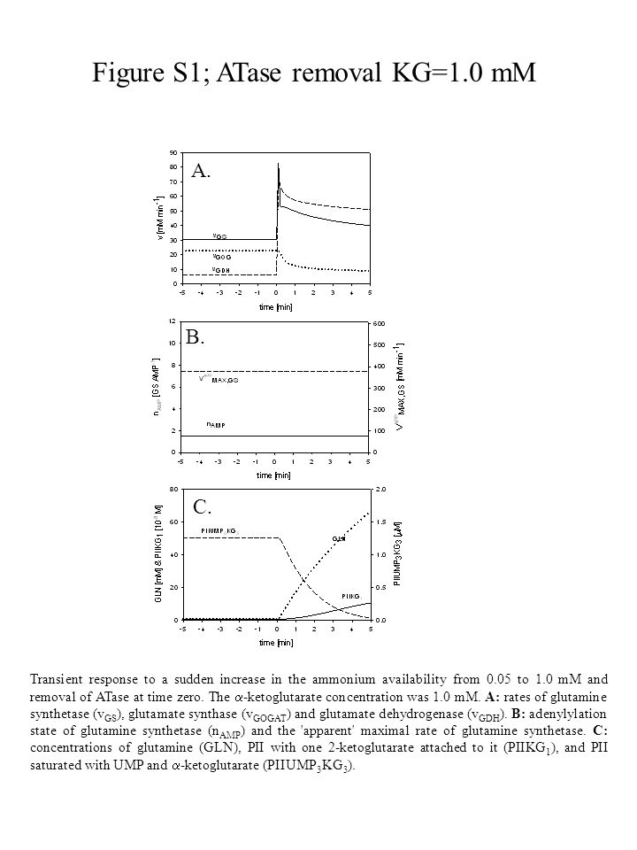Figure S1; ATase removal KG=1.0 mM Transient response to a sudden increase in the ammonium availability from 0.05 to 1.0 mM and removal of ATase at time zero.