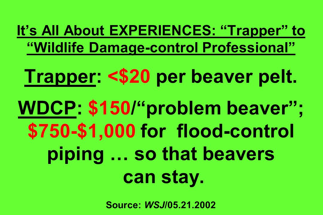 Its All About EXPERIENCES: Trapper to Wildlife Damage-control Professional Trapper: <$20 per beaver pelt. WDCP: $150/problem beaver; $750-$1,000 for f