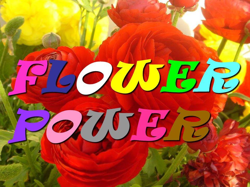 FLOWERPOWERFLOWERPOWERFLOWERPOWERFLOWERPOWER FLOWERPOWERFLOWERPOWERFLOWERPOWERFLOWERPOWER