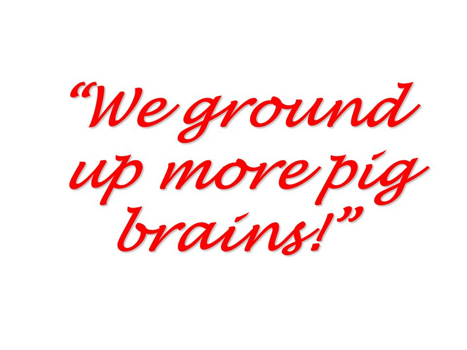 We ground up more pig brains!