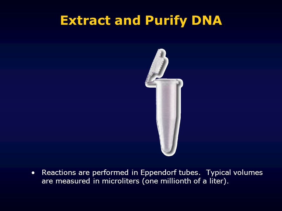 Extract and Purify DNA Reactions are performed in Eppendorf tubes. Typical volumes are measured in microliters (one millionth of a liter).