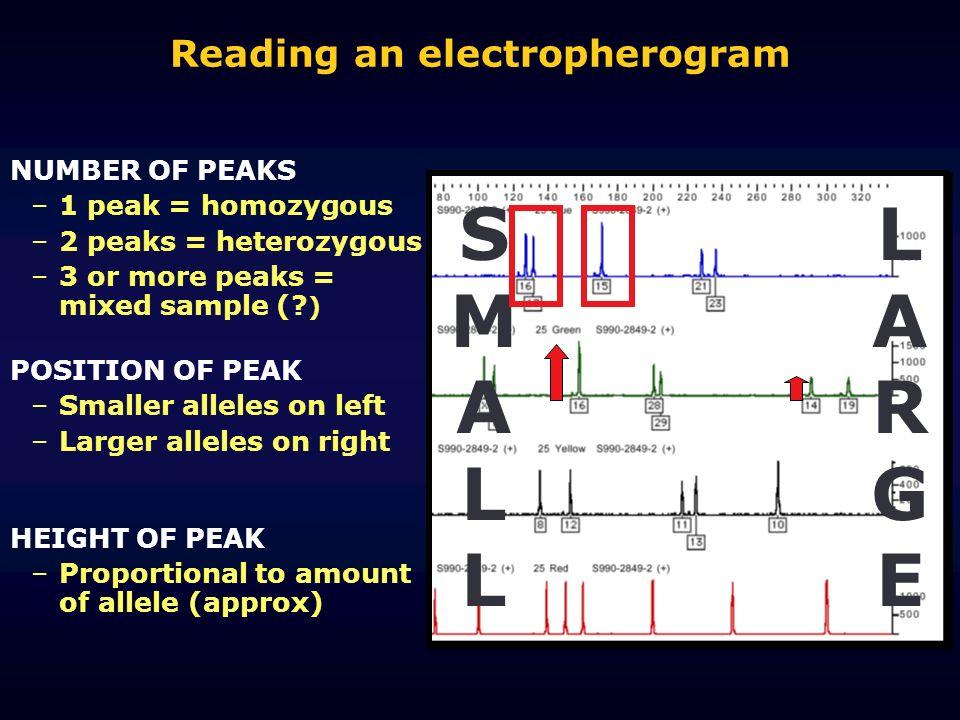 Reading an electropherogram LARGELARGE SMALLSMALL NUMBER OF PEAKS –1 peak = homozygous –2 peaks = heterozygous –3 or more peaks = mixed sample (? ) PO