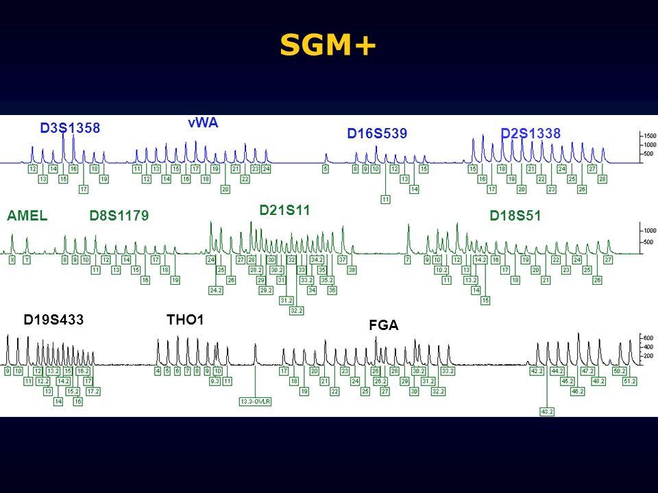 SGM+ D3S1358 vWA D16S539D2S1338 AMELD8S1179 D21S11 D18S51 D19S433THO1 FGA