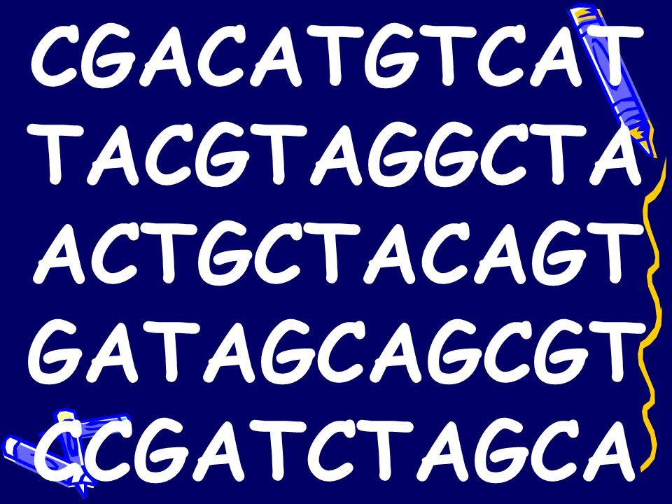 bases = nucleotides