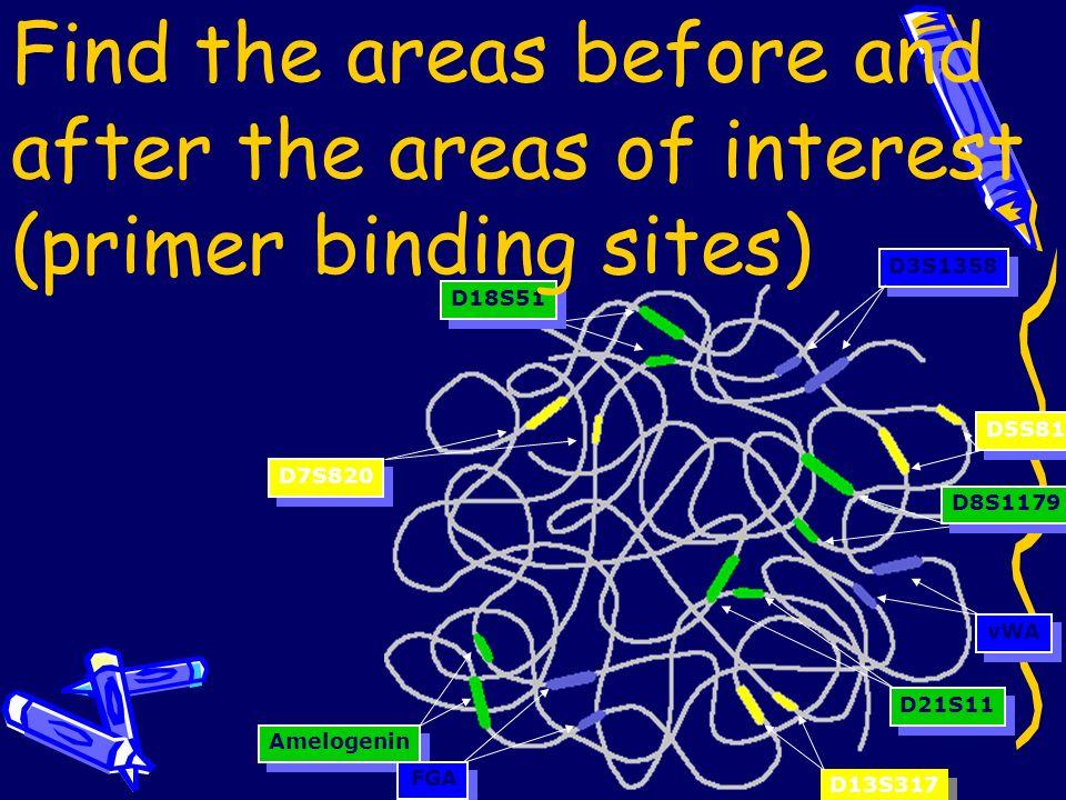 Find the areas of interest D8S1179 D21S11 Amelogenin D18S51 D3S1358 FGA vWA D5S818 D13S317 D7S820