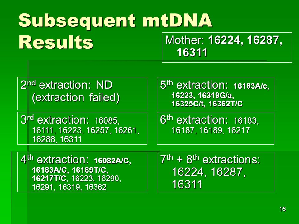 16 Subsequent mtDNA Results 2 nd extraction: ND (extraction failed) 3 rd extraction: 16085, 16111, 16223, 16257, 16261, 16286, 16311 4 th extraction: 16082A/C, 16183A/C, 16189T/C, 16217T/C, 16223, 16290, 16291, 16319, 16362 5 th extraction: 16183A/c, 16223, 16319G/a, 16325C/t, 16362T/C 6 th extraction: 16183, 16187, 16189, 16217 7th + 8th extractions: 16224, 16287, 16311 Mother: 16224, 16287, 16311